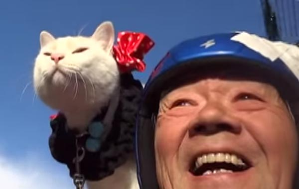 This Motorcycle Kitty Is Like a Furry Parrot
